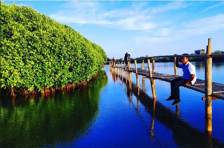 Hutan Mangrove di Kulon Progo