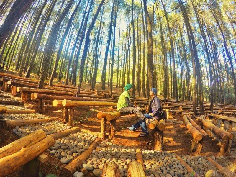 Hutan Pinus Mangunan Dlingo di Bantul